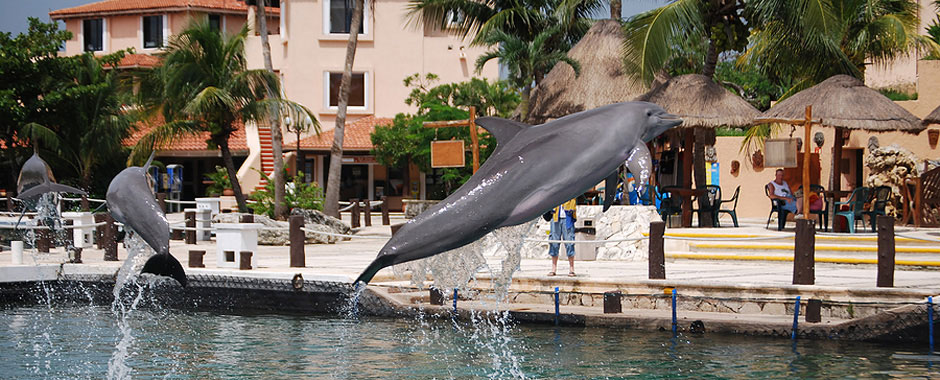 Swim with the Dolphins in the Mayan Riveria